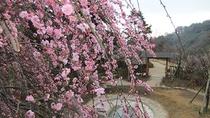 *周辺観光<春の熱海梅園(当館より車で約9分)