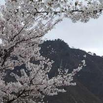 桜と坂戸山