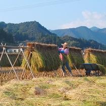秋になると稲刈りの風景をご覧いただけます