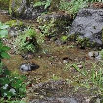 和室10畳(桜・藤)からの眺め