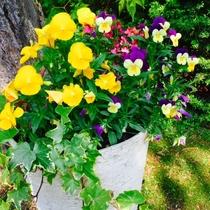 ・綺麗なお花がお出迎え・