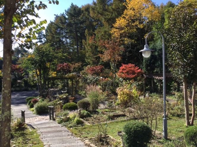 10月 紅葉し始めました。