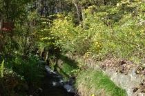 春 小川の流れる庭