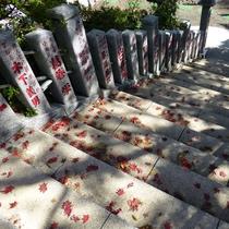 """*【阿夫利神社周辺】神社へ続く階段には、小さな秋""""真っ赤な紅葉"""""""