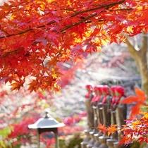 **【雨降山大山寺の紅葉】石段の頂上からは伊勢原の街が見下ろせ、気分はまさに天空の紅葉狩り!