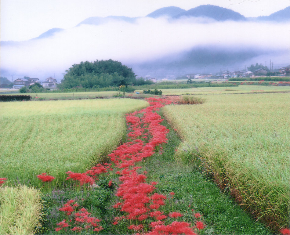 大原里の風景