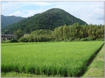 ■旅荘茶谷農場