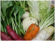 ■大原で育った採れ立て自家栽培野菜
