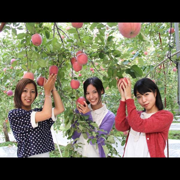長野といえばとっても甘く、ほんのり甘酸っぱいリンゴが名産品りんご狩り体験もできます♪