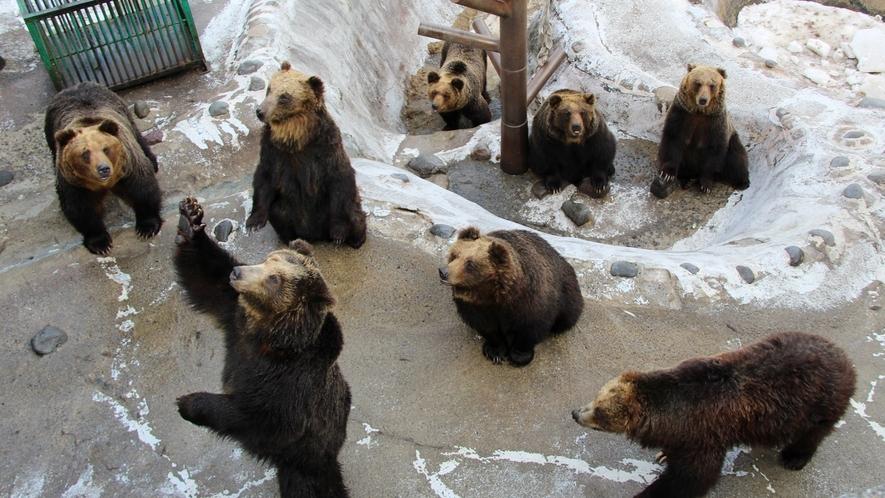 ◆周辺観光「のぼりべつクマ牧場」(イメージ)