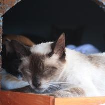 *【ネコ】当館ではたくさんのネコ達がお客様をお出迎えいたします♪