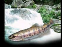 渓流釣イメージ