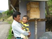 孫とジジと蜂