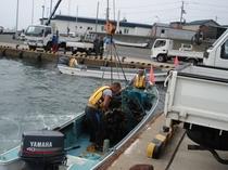 襟裳岬の昆布漁2