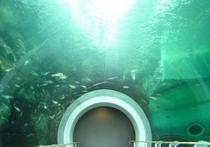 びわ湖博物館(車で約31分)