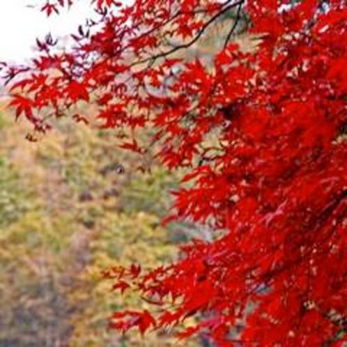 大湯温泉の紅葉もみじ&錦の山