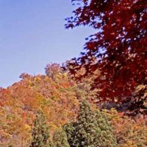 大湯温泉の紅葉錦の山々