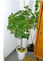 女将さんが育てた観葉植物がいくつも並べられた館内。