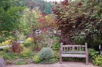 赤いリーフのある庭