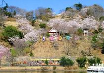 桜・花ロマン・弁慶・滴翠湖11