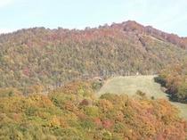 Wizから車で5分、スキー場中腹10月中旬スキー場の紅葉