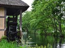 大王わさびの農場の水車小屋