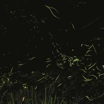 幻想的な蛍に出逢う温泉旅