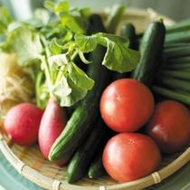 地元農家さんからの朝どれ新鮮野菜