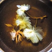 ホタルイカしゃぶしゃぶ 出汁(桜)