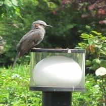 庭灯の上の野鳥