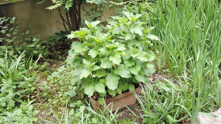 *女将が手入れしているお庭。お野菜やお花などが植えられています♪