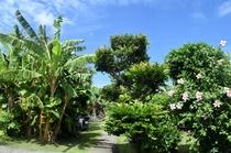 南国植物に囲まれている中庭