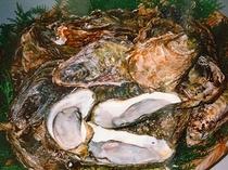 プリプリの殻付牡蠣