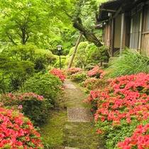 *庭園の様子。庭園の石畳の両脇に色濃く咲くサツキの花。