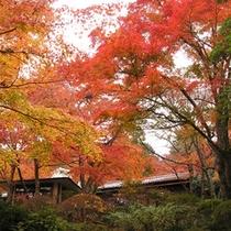 *離れ「明星」秋になると、お部屋の窓辺に広がる紅葉風景をお楽しみいただけます。