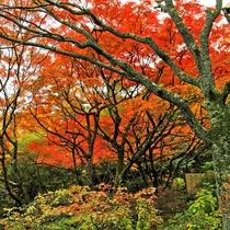*紅葉シーズンはお庭の木々の燃えるような色あいをお楽しみいただけます。