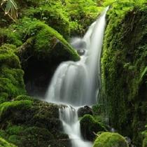 自然園内 蓼仙の滝
