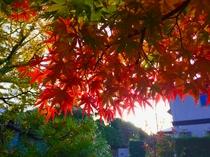 ホテル庭園で撮影(26.11.25)