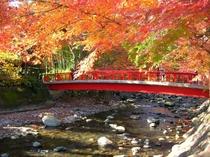 修善寺:桂橋(紅葉は例年11月下旬からが見頃です)