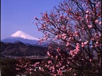 大仁ホテルからの富士山③