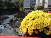 修善寺:菊まつり(10/5~11/14まで開催)