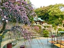 大仁神社と梅