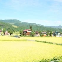 ☆周辺・景色_夏