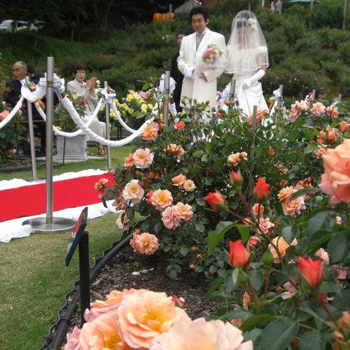 *【6月バラ祭り】ローズガーデン挙式(イメージ)