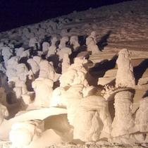 冬の樹氷群