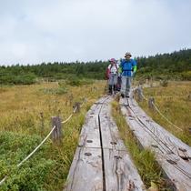 高山植物や珍しい昆虫との出合いもうれしい高原トレッキング。山岳インストラクターの同行も可能・要予