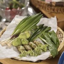 春の味覚・山形の山菜たち♪様々な料理で美味しく提供