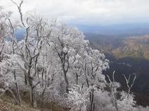 高見山樹氷