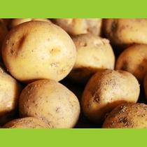 自家栽培のジャガイモ
