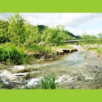 伊南川では渓流釣りを楽しむ事ができます
